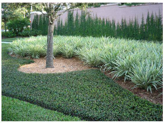 Trees, Shrubs, and Ground